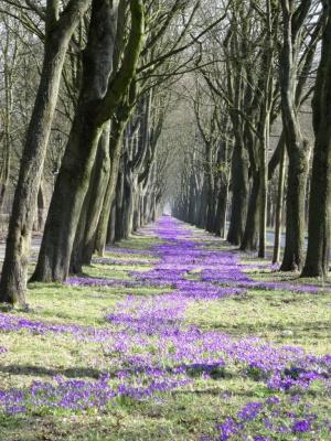 Bild: Blaues Band des Frühlings: J. M.